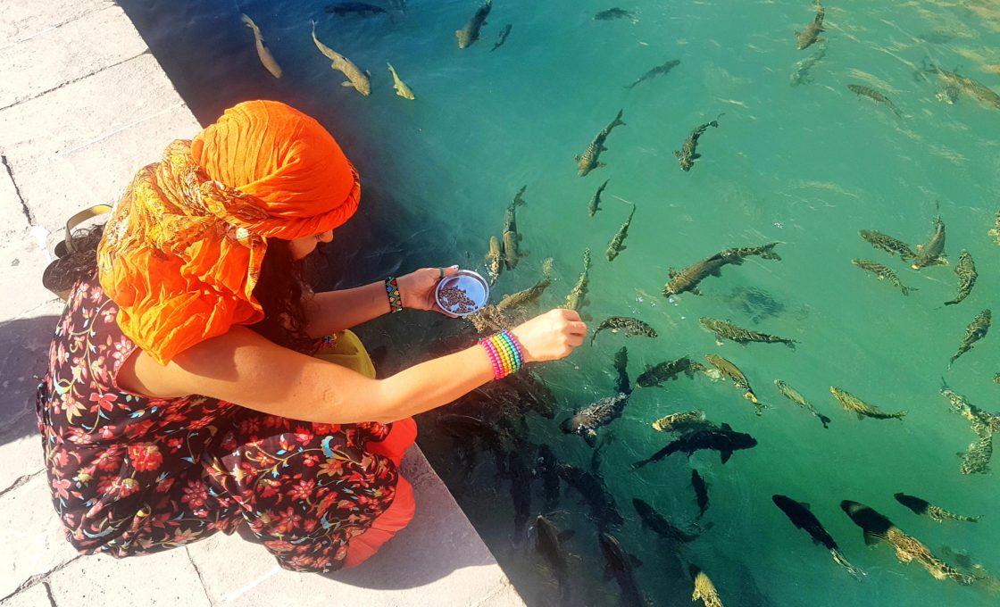 Şanlıurfa Balıklı Göl
