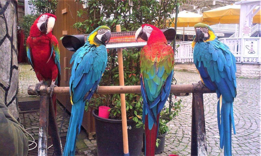 Yalova Termal ve zavallı papağanlar
