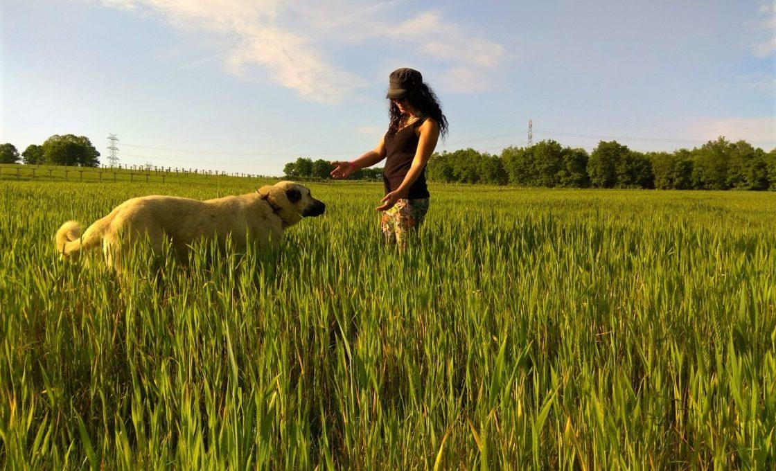 Kanara Kayalıkları, köpeğim ve ben