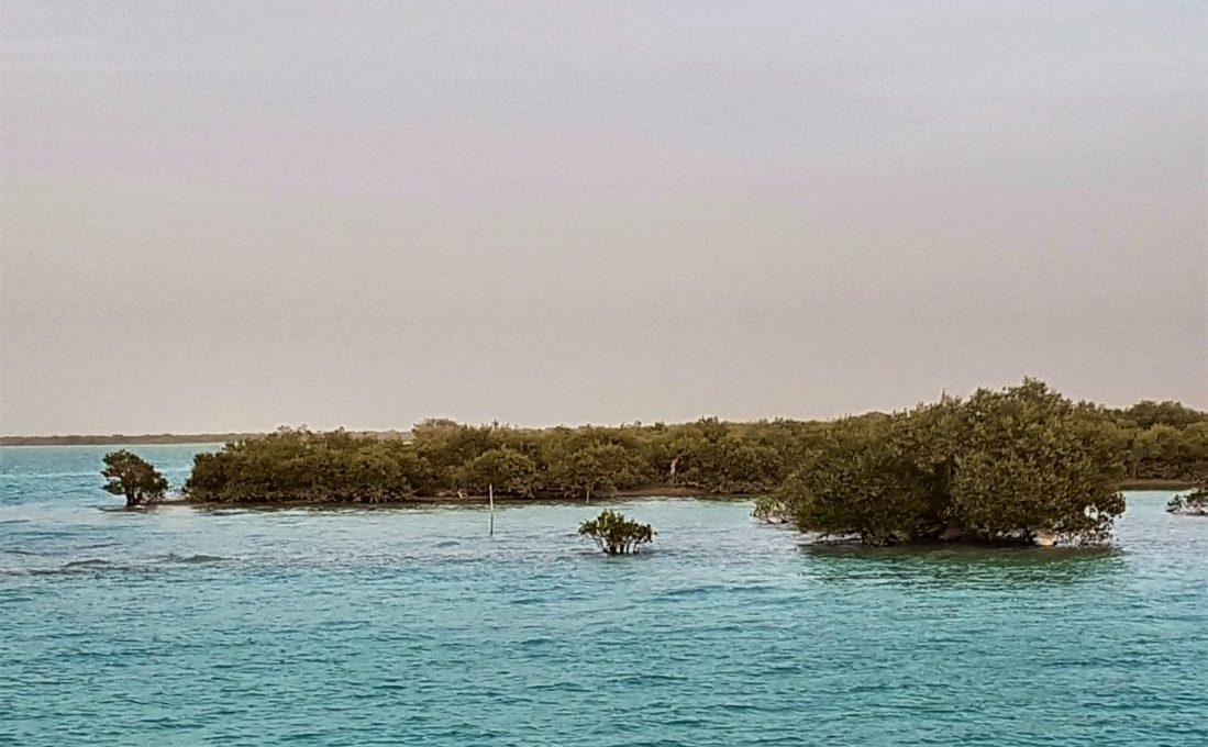 Keşm Adası, Hara Forest
