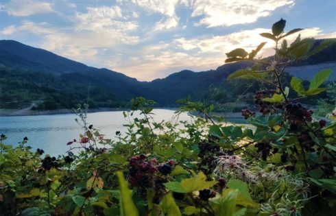 Erfelek Barajı, muhteşem böğürtlenler