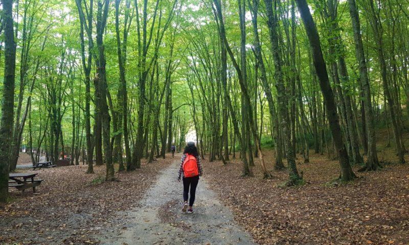 Belgrad Ormanı ve Son Mantar Avcıları