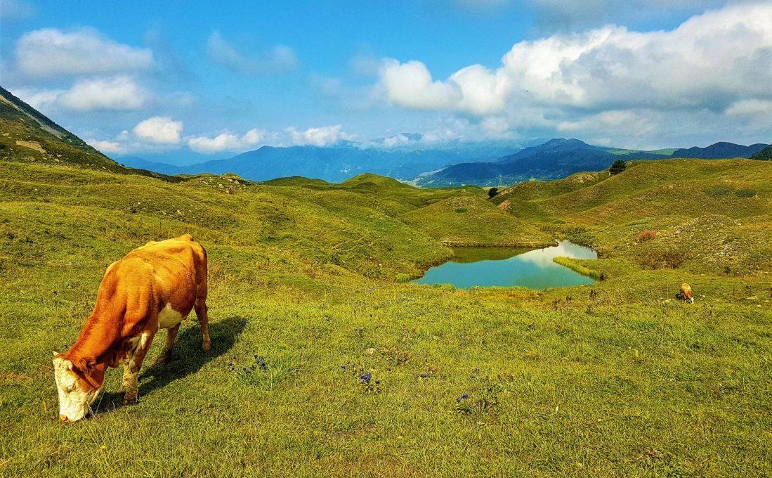 Arsiyan Yaylası Yüzen Adalar Nasıl Gidilir?